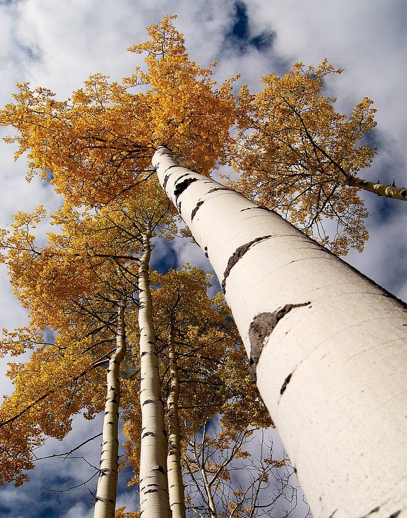 Popular tree